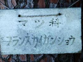 Matsu25_2