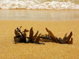 Beachfs